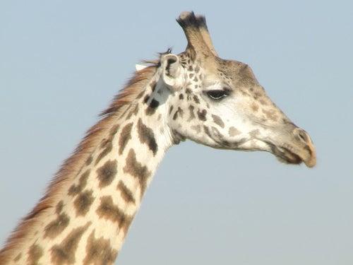 Parque Nacional de Nairobi, nos vamos de safari a África