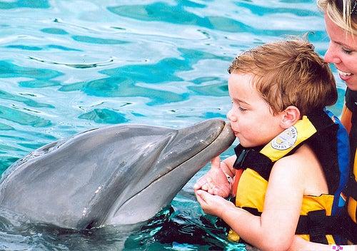 Parques acuáticos y nadar con delfines