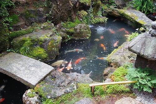 La belleza y serenidad de los jardines zen japoneses for Estanque japones