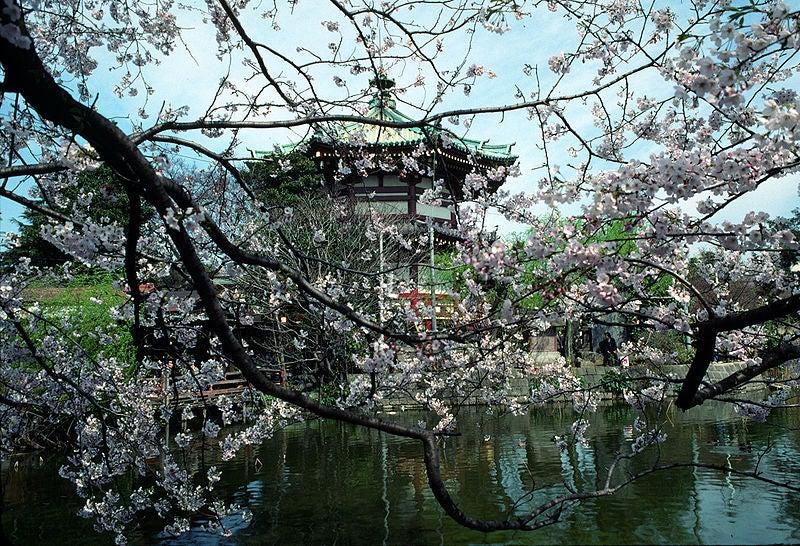 El magnífico espectáculo de la primavera en Tokio