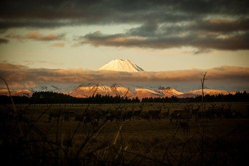 Les presento Nueva Zelanda, la tierra del Hobbit