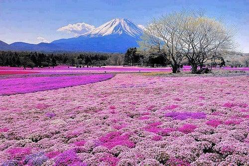 Viaje al monte Fuji, Japón