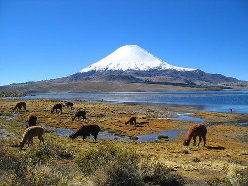 Recorrido por el Parque Nacional Lauca, Chile