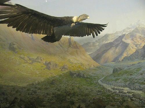 La Quebrada del Cóndor, donde observar el soberbio vuelo de estas aves