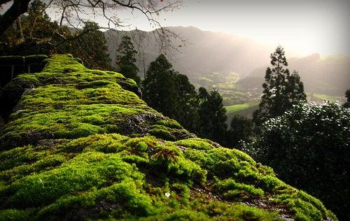 Las islas Azores, una escondida maravilla de la naturaleza