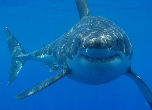 Una real aventura: visitar Seal Island y ver al gran tiburón blanco