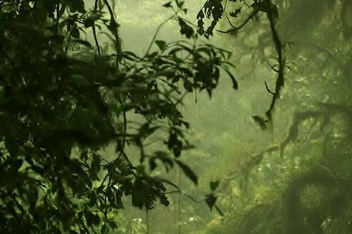El Parque Nacional Los Quetzales de Costa Rica, la selva más pura