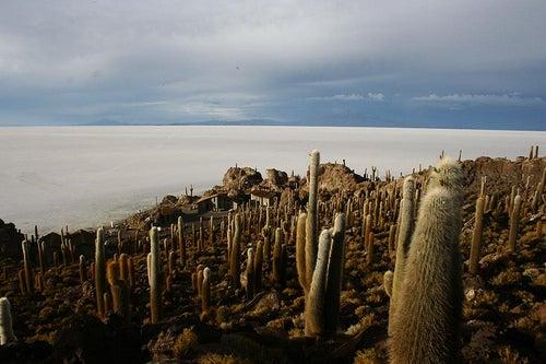 Naufraga en un Mar de Sal en Bolivia