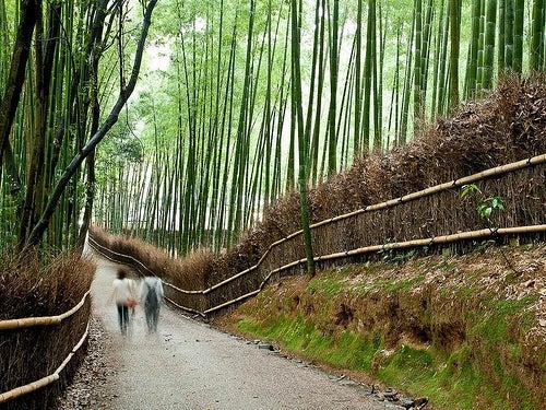 El bosque de bambú en Japón, una estampa inolvidable