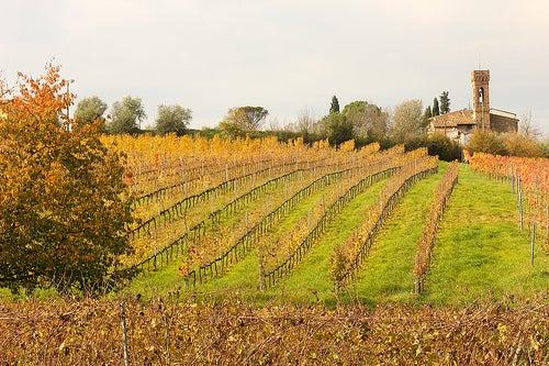 La ruta del vino en Cerdeña, Italia