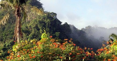 El Parque Khao Sok, una selva encantada al sur de Tailandia