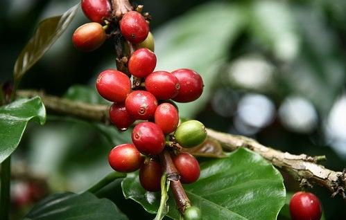 La Zona Cafetera de Colombia: el mejor café y turismo