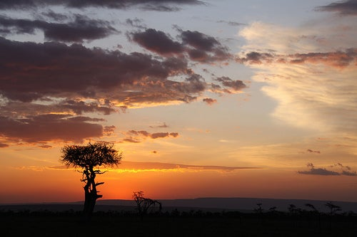 Safari fotográfico en África, siente la llamada de la selva