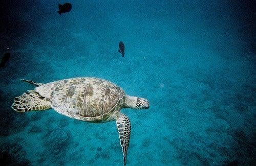 Hoteles submarinos dulces sue os bajo el agua for El hotel que esta debajo del agua