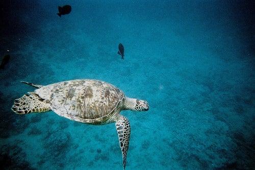 Hoteles submarinos, dulces sueños bajo el agua