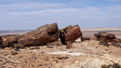 Monumento-Natural-Bosques-Petrificados-jaramillo