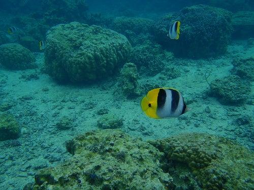 arrecifes-de-coral-huahine