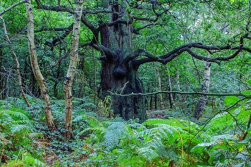 bosque-sherwood-inglaterra