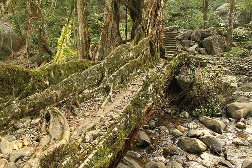 los puentes más hermosos del planeta-Meghalaya