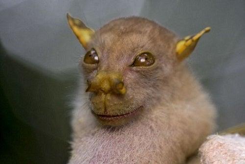 Los 6 animales más raros del mundo