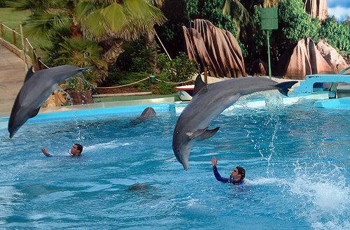 zoomarine-delfines-el-algarve