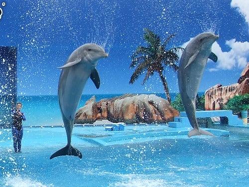 Nadar con delfines, los mejores lugares