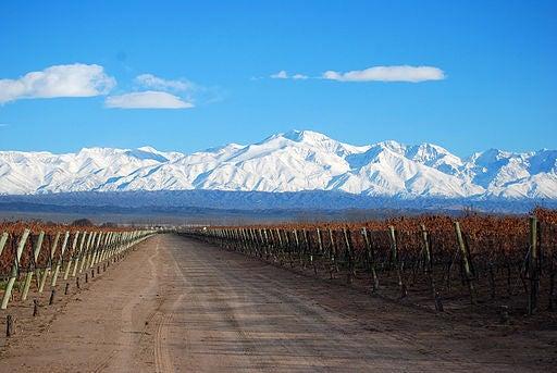 Los viñedos en Mendoza.