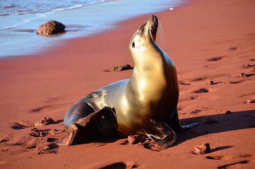 Islas Galápagos_