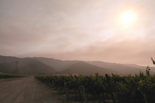 Ruta de los vinos en California