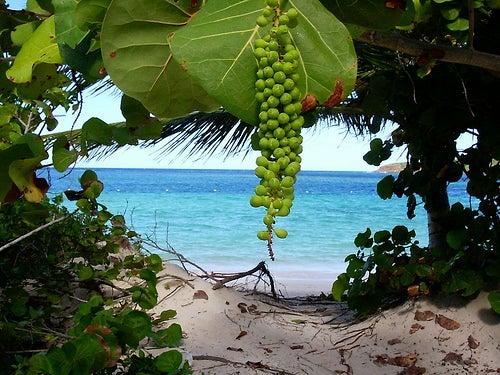 playas más bellas y desconocidas del mundo_Flamenco beach