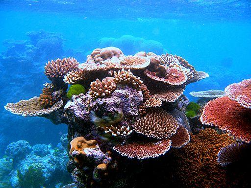 Una imagen en la Gran Barrera de Coral.