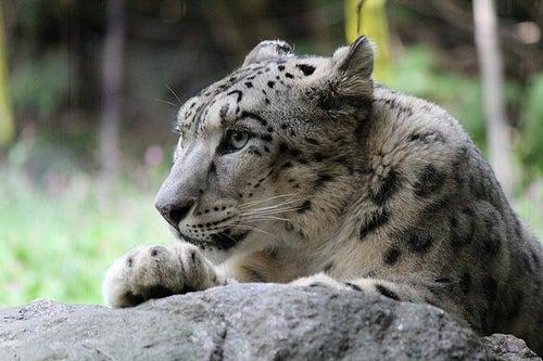 zoológicos más famosos del mundo_bronx