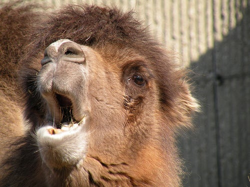 zoológicos más famosos del mundo_londres