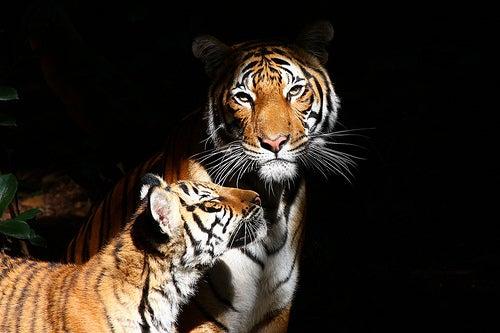 Los zoológicos más famosos del mundo