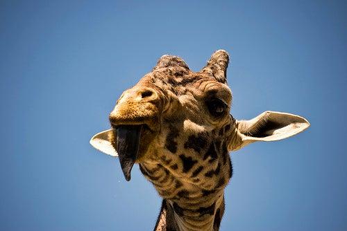 zoológicos más famosos del mundo_toronto
