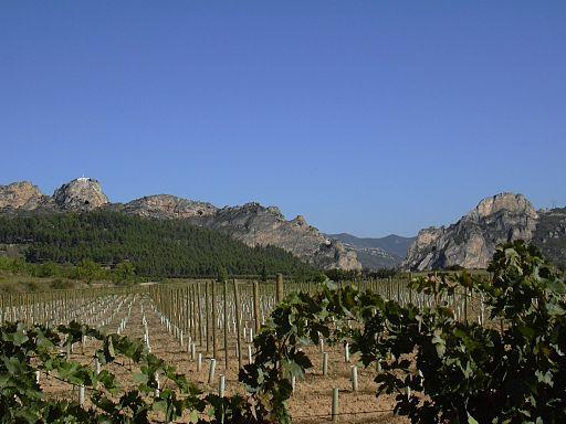 Viñedos en La Rioja, España.