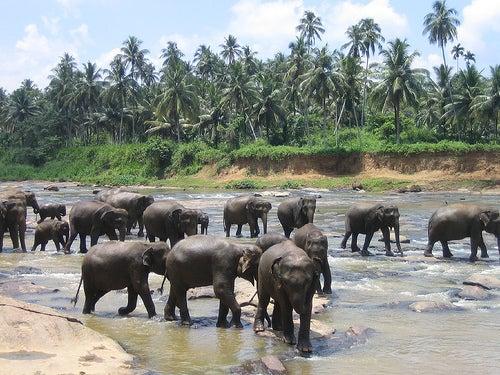 Los mayores espectáculos de la fauna de todo el mundo_reunión de elefantes