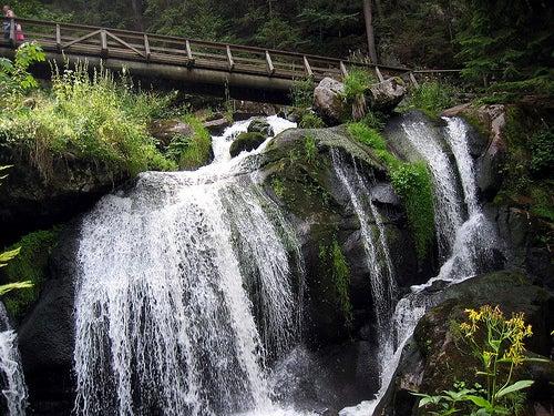 cascada-selva-negra