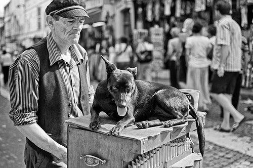 ¿A dónde viajar con perros?