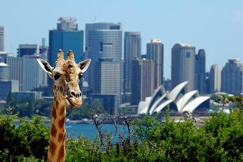 Las curiosidades de Australia