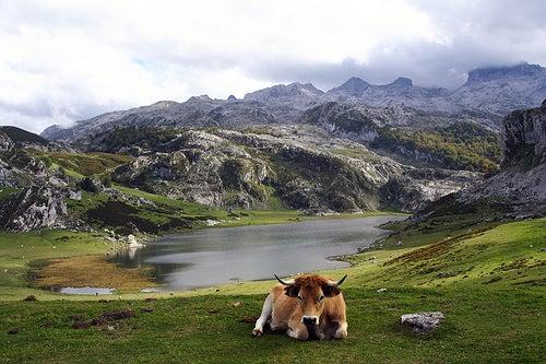 lagos-de-covadonga-asturias