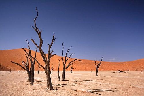 Deadvlei, en Namibia.