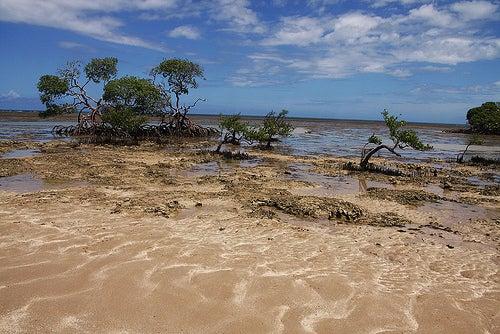 Isla de Boipeba, en Brasil