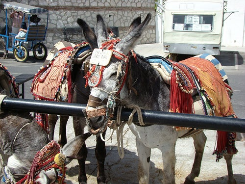 burro-taxi-mijas