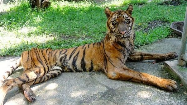 El Zoo de Surabaya, el terror de los animales