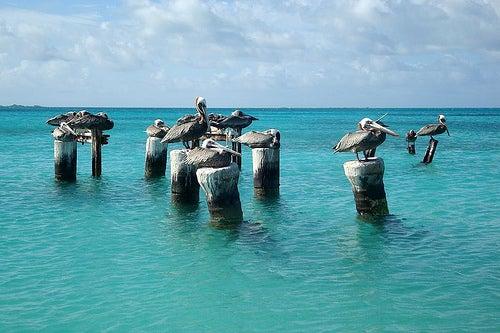 Islas Los Roques, en Venezuela