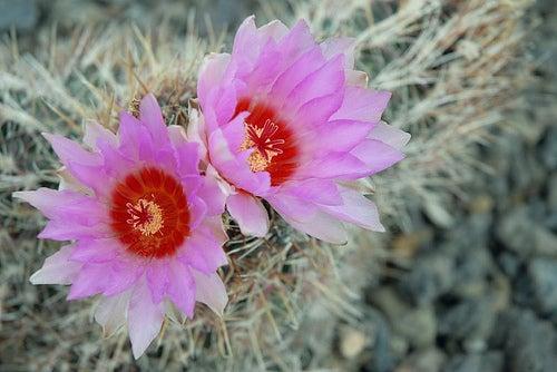 planta-endemica-desierto-de-tabernas