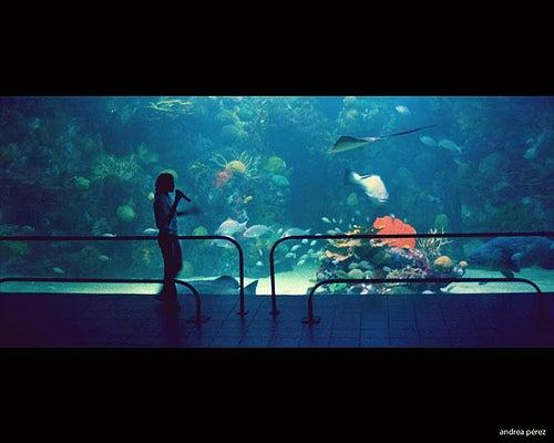 acuario de veracruz en mexico