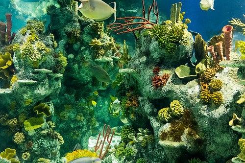 acuario bristol