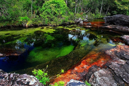 Caño Cristales en Colombia, el río que se escapó del paraíso